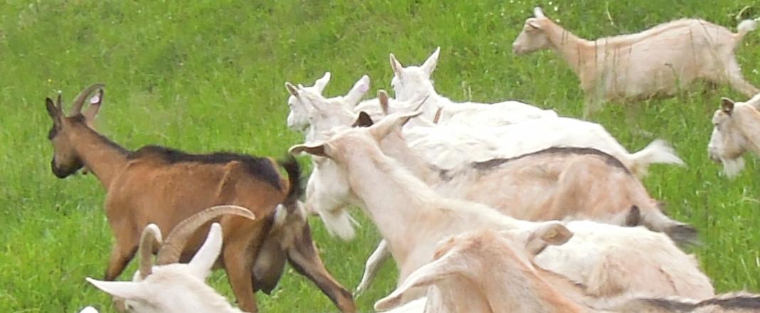 Výlet na Kozí farmu
